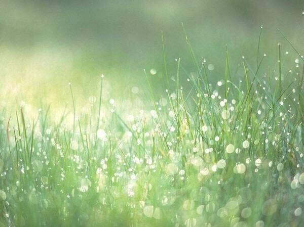 【自然物语】冬日的雨